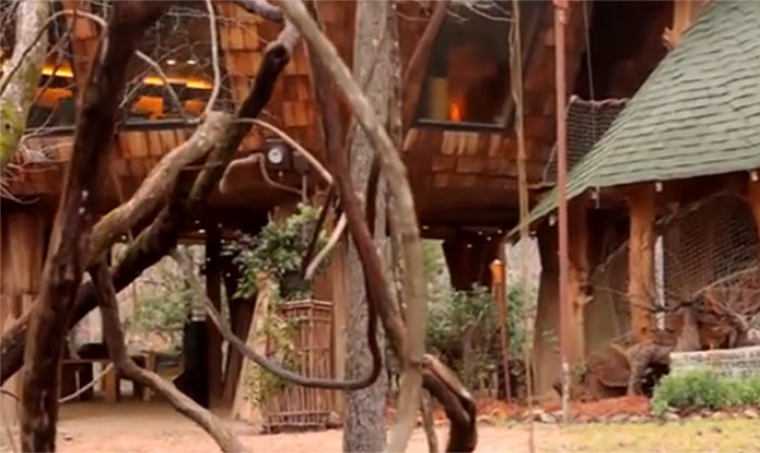 Uncle Builds His Family A Huge Treehouse 40 Years Later